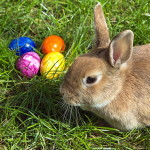 Kaninchen Foto:Superbass Quelle:http://commons.wikimedia.org/wiki/File:Easterbunny_1.jpg Lizenz: CC