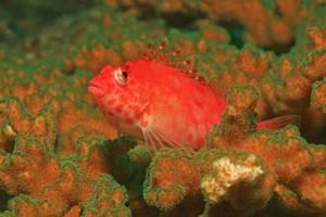 lebemdfutter für korallen