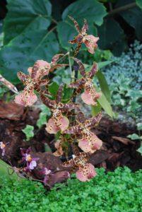 Orchideen Im Terrarium Mikes Hobby Blog